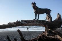 She loves to climb stuff