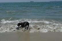 loves the beach