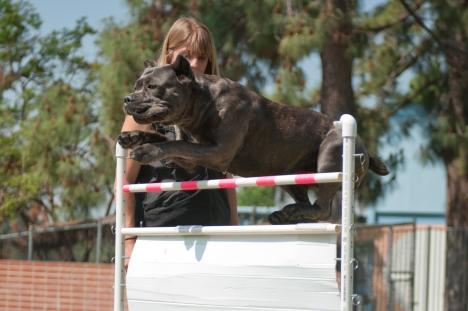 Nasa jumping the French Ring hurdle at 110cm.