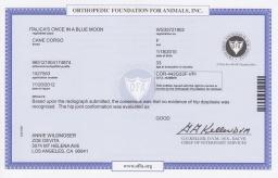 Nasa OFA hip certificate