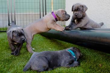 Nasa Pups-227