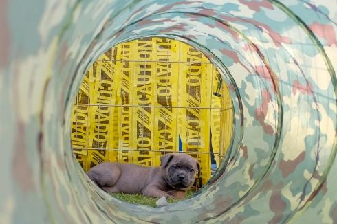 Nasa Pups-235