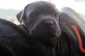 Nasa Pups-252